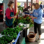 Farmers' market vendors gearing up for winter