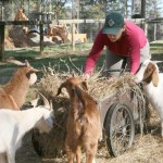 Goat Patrol serves as weed-removal alternative
